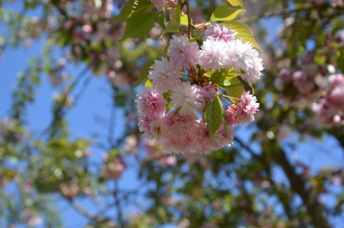 jardin,printemps,avril