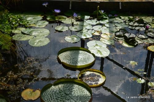 les jardins d'eau de Carsac 147.JPG