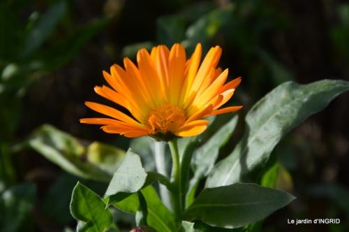 jardin en hiver,à Ciron 071.JPG