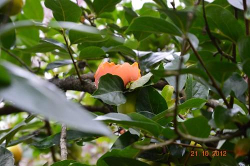 automne,troc2012,Mouleydier,serre 024.JPG