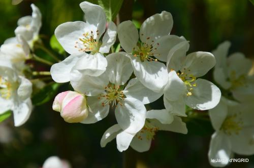 herons,fête des fleurs Bergerac,tulipes,jardin 009.JPG