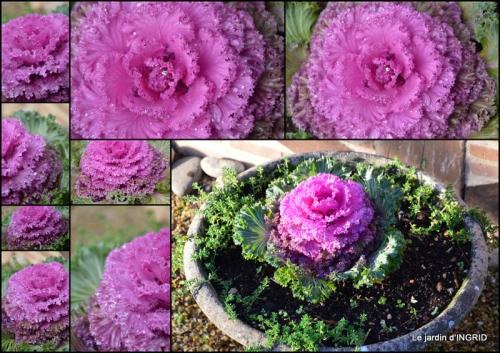 2014-12-20 jardin,choux,tombola Lalinde,lampions.jpg