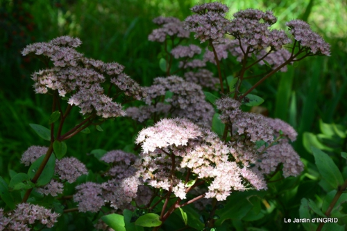 jardin pour l'automne,affiche vide jardin 046.JPG