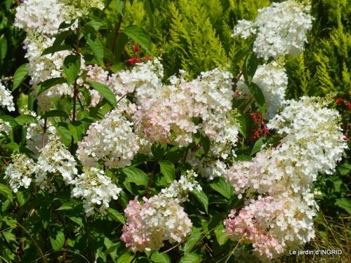 Issigeac paniers,visite Brigitte Mathis,jardin 043.JPG