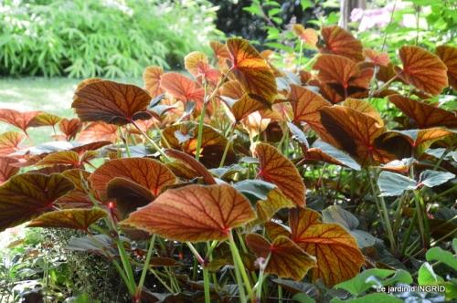 jachère,couleur,bouquet 023.JPG