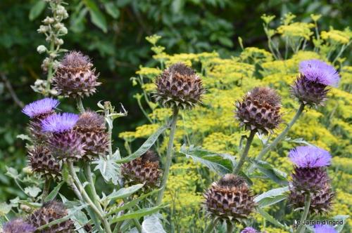 tournesols,pt jardin,nénuphard,libellules,lavande bouquet,carava 086.JPG
