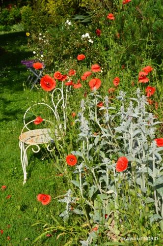 cygnes,Sophie,jardin en mai 045.JPG