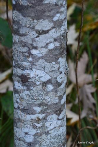 troncs,automne,vieilles photos 046.JPG