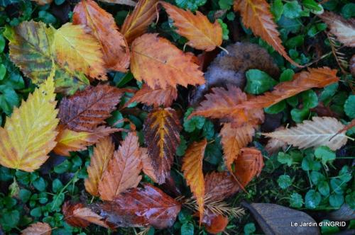 Romefort,bord de Creuse,vent,feuilles,jardin,canal 190.JPG