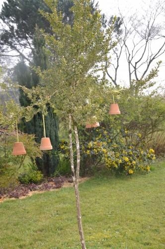 Beaumont,tulipes,primevères et autres,chez Bernadette 140.JPG