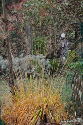 Brouillard,cypres chauve,jardinage 047.JPG