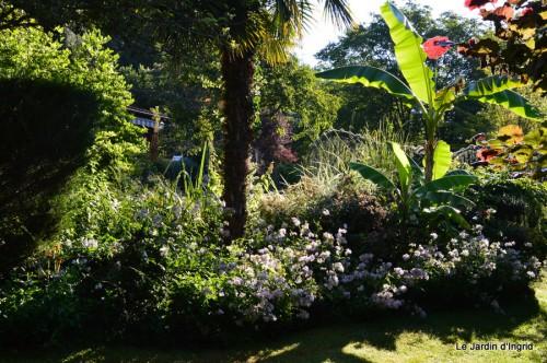 jardin,marché,vieilles photos,bignonia,gouttes,Ste Avit Seigneur 052.JPG