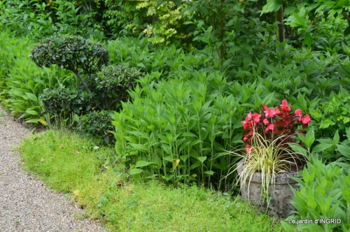 tempête colline,jardin en juin 095.JPG