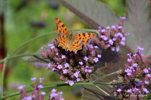 chez Dédé,papillons,Claudine Dordogne,champignons,toile d'araign 091.JPG