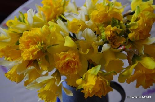 roseaux,narcisses,Nikky,semis,jardin 039.JPG