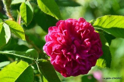 Julie,Lalinde,Cygnes,Roses,Osier à Monbazillac 120.JPG