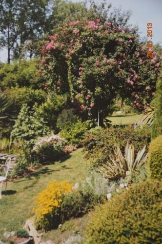 jacinthe,oiseaux,gouttelettes,vieilles photos,dégats 064.JPG