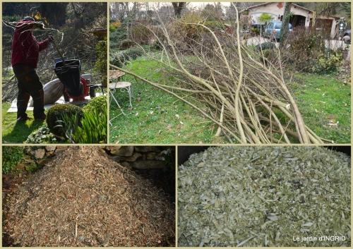 2016-02-22 jonquilles,oiseaux avec noix,taille arbres,jardin2.jpg