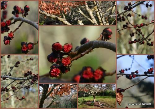 2016-01-24 oiseaux cacaouettes gouttes,petits fruits.jpg