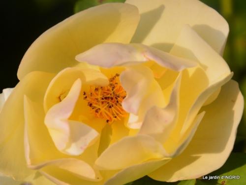 male ancienne,septembre jardin,couronne,bouquet 087.JPG