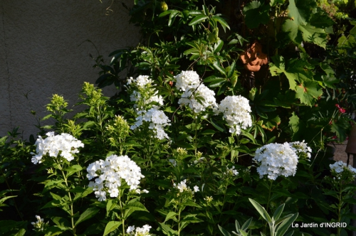 dahlias,jardin,puces st Avit Seigneur,Paniers Issigeac,Romane 041.JPG