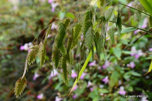 jardin ,bouquet 036.JPG