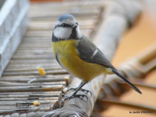 Noel st Astier,oiseaux,coq,jardin 023.JPG
