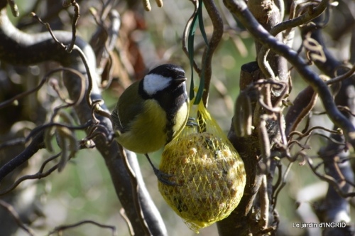 enveloppes,hélébores,oiseaux, 046.JPG