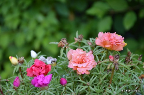 jardin matin,Romane ,nicky 020.JPG