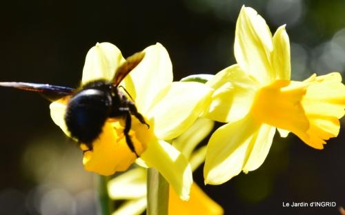 jardinière,insectes,achats 013.JPG