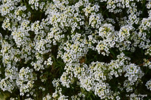 jardin,fleurs blanches 058.JPG