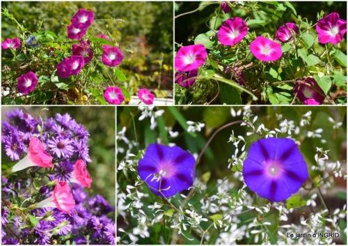 2017-09-29 canal dentelles,Nernadette,fleurettes,apres tonte1.jpg