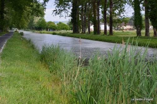 canal,fleurs blanches,marguerites,LE FLEIX,osier 059.JPG