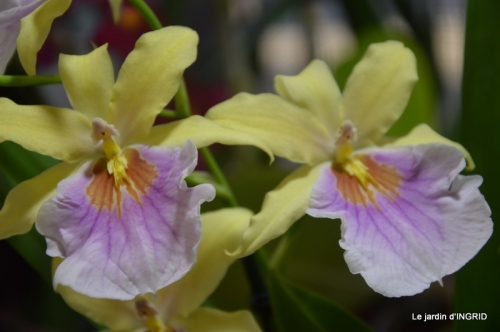 canal,jardin,Mombazillac,bonzais,orchidées 137.JPG