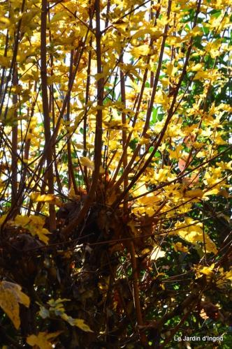 jardin automne ,petits roses 072.JPG