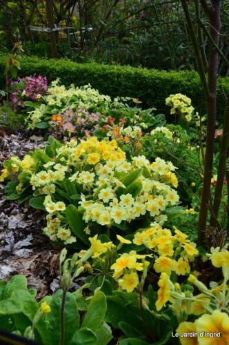 jardin ,cane sauvage,paquerettes,tulipes 107.JPG