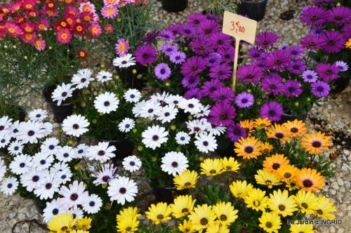Cadouin,ancolies,roses,pollen,osier,photos Fabien,coquelicots 022.JPG