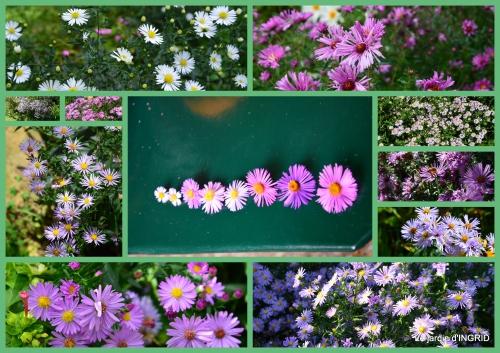 2015-10-01 jardin Mme Perichou,grandes fleurs,bouquet,jardin1.jpg