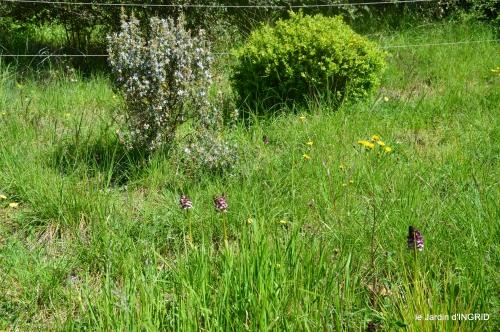 colline,orchidée,nature,jardin fleuri 005.JPG