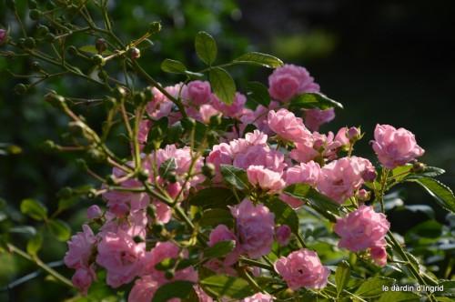jardin,fruits,Caro,papillons,manthe religieuse,Lalinde 048.JPG