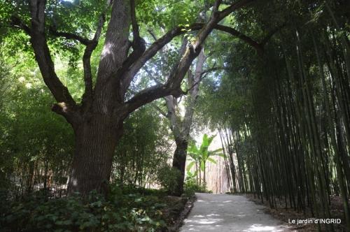 bambous Roque Gageac,jardin,bouquet 174.jpg