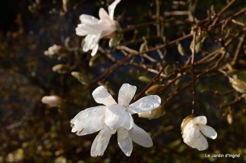 bouquet mamy,jacinthes,semis,jardin 037.JPG
