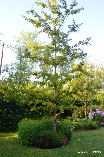 libellules,papillon,jardin,Froidefond,David,Meyrals 082.JPG