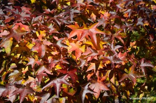 jardin automne,voisinage,canal 135.JPG