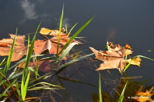jardin automne,voisinage,canal 056.JPG