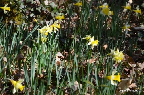 bouquet,pt jonquilles,bord Dordogne 077.JPG