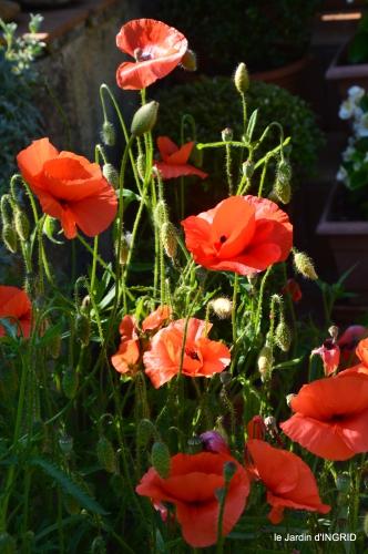cygnes,Sophie,jardin en mai 031.JPG