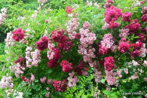 mon jardin,dégats buis, 014.JPG