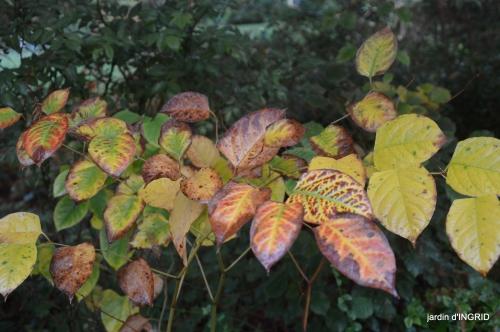 couleurs d'automne,bouquet,lune 096.JPG