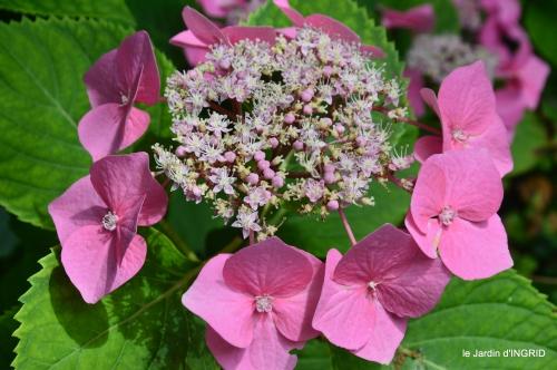 jardin,papillons,Cadouin,légumes,Sophie, 063.JPG